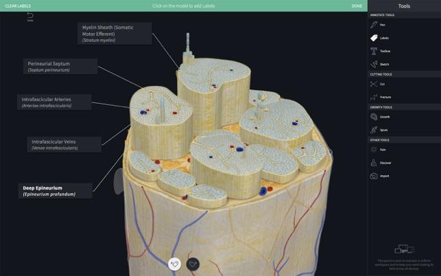 anatomy download free software