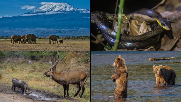 WorldView: Wildlife screenshot-3