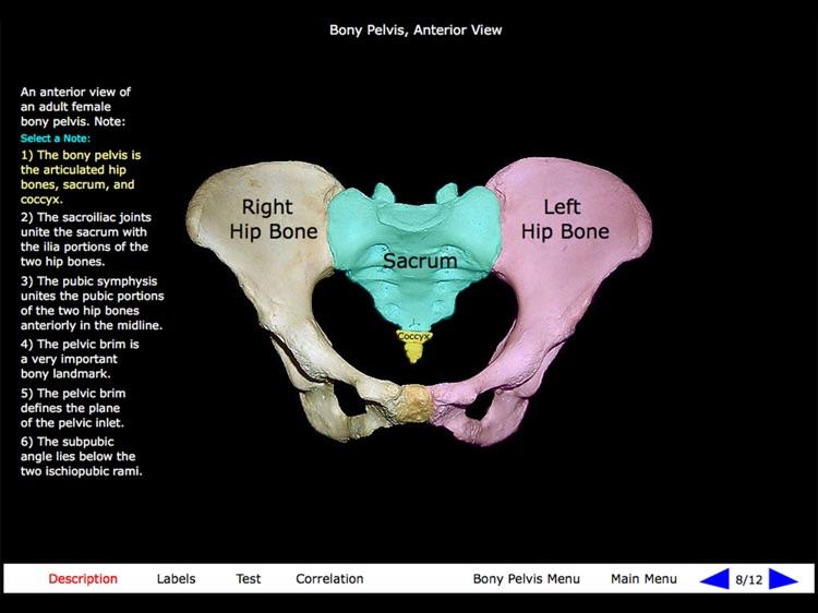 Gross Anatomy of the Skeleton screenshot-5