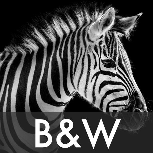 Black & White Photo Effects