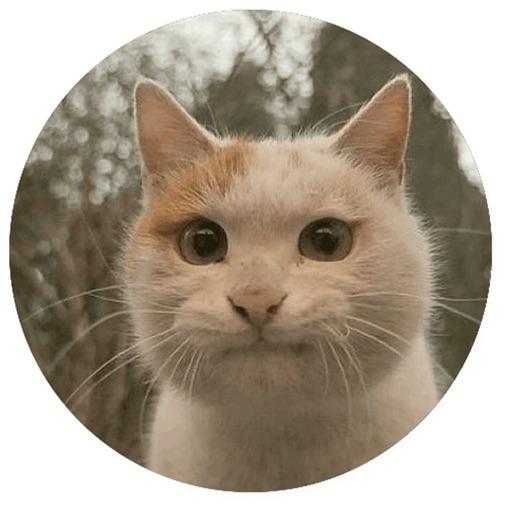 Stupid cats Stickers