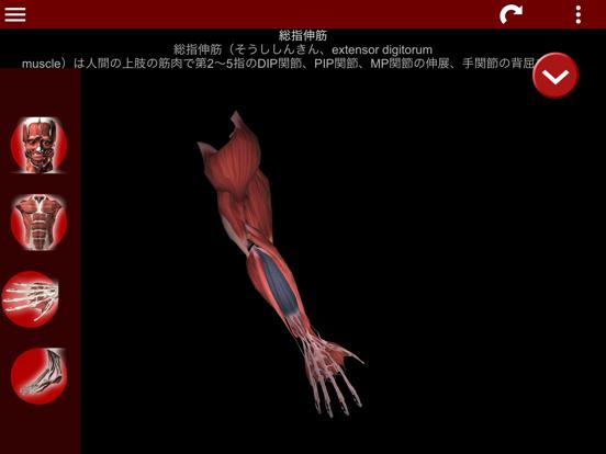 筋肉系3D(解剖学)のおすすめ画像3