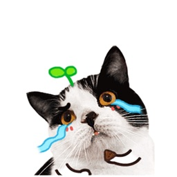 Catty Animated Stickers