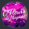 O' Fleurs de Magenta