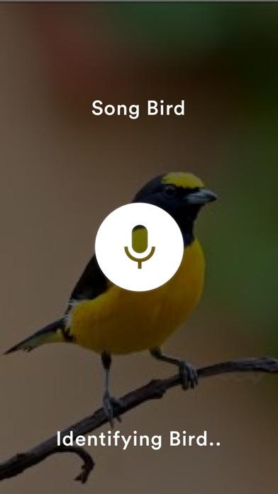 SongBird Pro. screenshot two