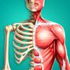 Discover Human Body AR - Academ Media Labs, LLC