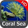 Coral Sea Nautical Charts HD