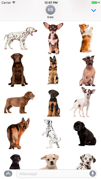 Screenshot for Chihuahua & Dalmatians & more in United States App Store