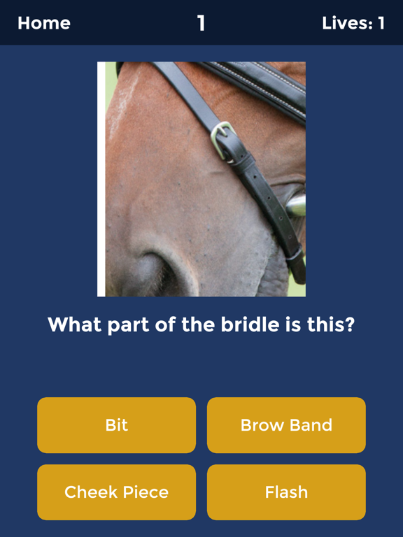 Horse Quiz by HayGrazer screenshot 4