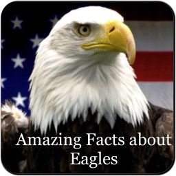 Amazing Eagles Facts 1800