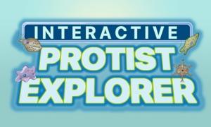 Interactive Protist Explorer