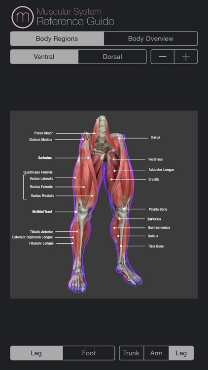 Human Muscular System Guide screenshot-3