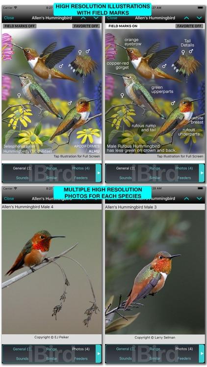 iBird Pro Guide to Birds screenshot-3