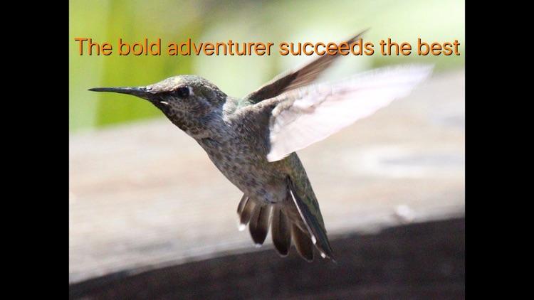 Hummingbird Moments screenshot-4