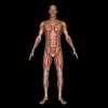 Localización muscular
