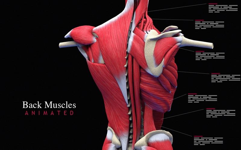 Back Muscles Animated скриншот программы 1