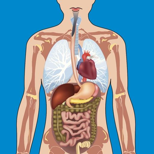 İnsan Vücudu Testleri