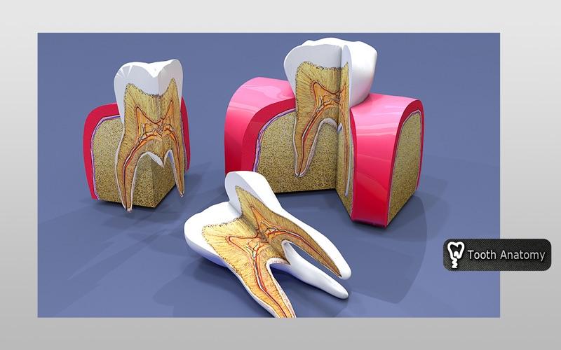 Tooth Anatomy скриншот программы 1
