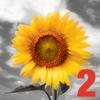 iSplash 2 - New Color Burst Photo Editor