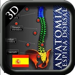 Anatomia de la espina dorsal