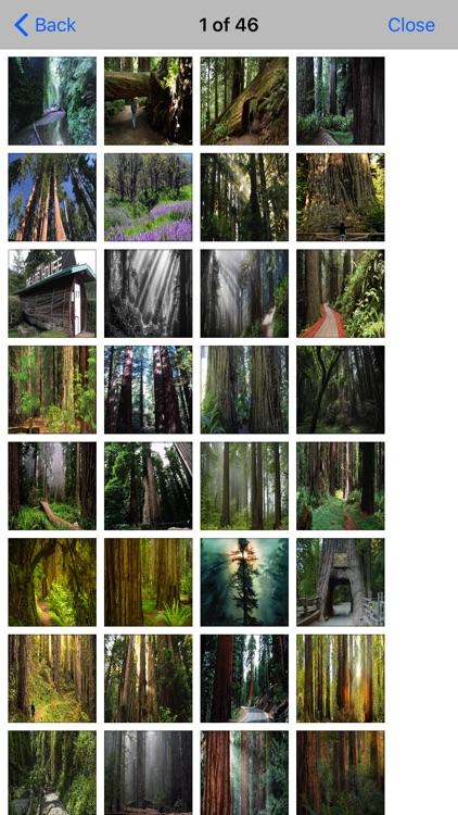 Redwood In- National Park screenshot-4