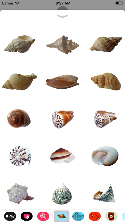 Seashell Stickers