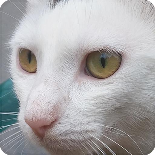 猫の鳴き声 - コレクション