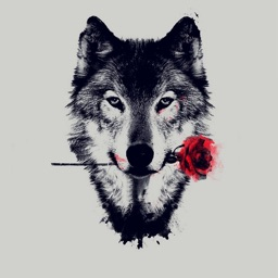 Wolf Wallpapers - Backgrounds