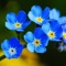 """Flower Encyclopedia"" has the most comprehensive species of flowering plants"