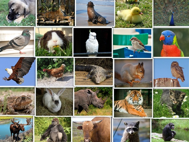 danske dyrelyde