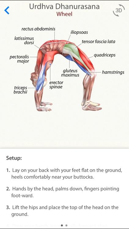3D Yoga Anatomy Lite