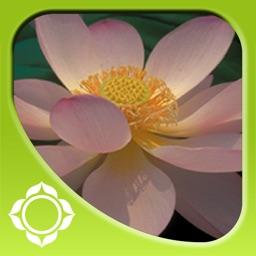 Awakening Compassion - Pema Chodron
