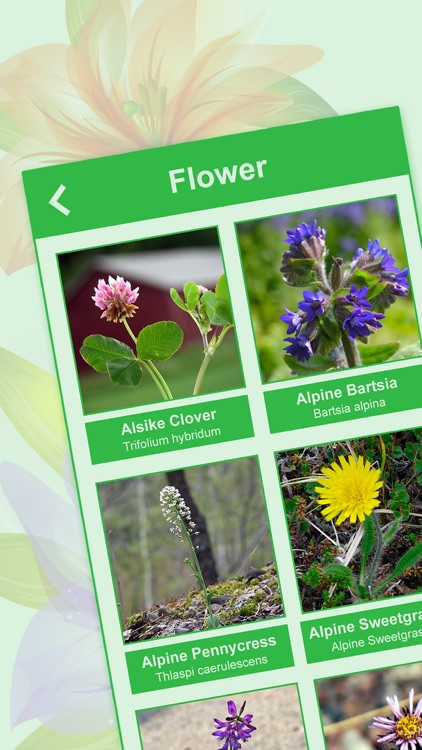 tree plant garden answers identification - Garden Answers