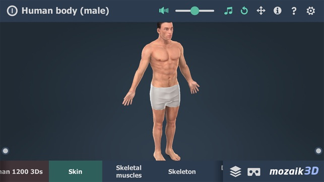 Human body (male) 3D on the App Store