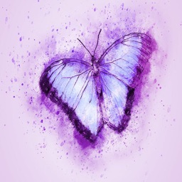 Butterfly Stickers - Sid Y