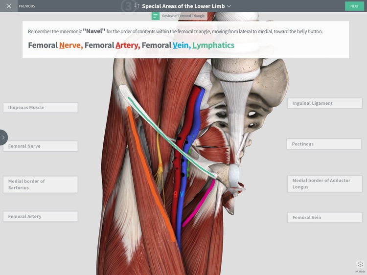 Undergrad Anatomy by Regions screenshot-0