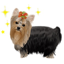 Yorkshire Terrier Dog Sticker