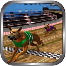 Activities of Crazy Real Dog Racing