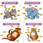 Nomi di animali Gioco apprendimento per bambini icon