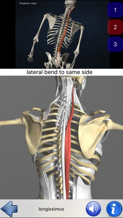 download Visual Anatomy apps 2