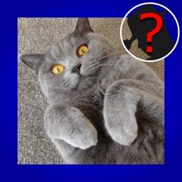 Domestic Cat Breed Quiz Maestro