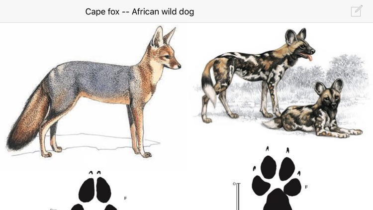 Mammals of the Southern African Subregion screenshot-4