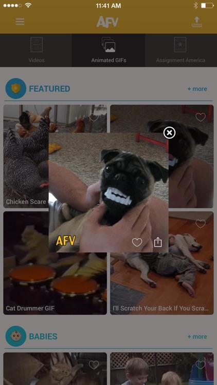 America's Funniest Home Videos screenshot-3