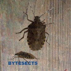 Activities of Bytesects  Real insects ants smasher game and screen saver kids game