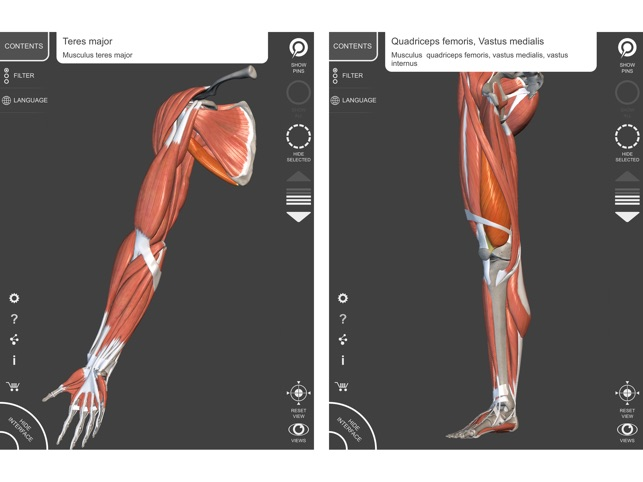 Muscle | Skeleton - 3D Anatomy on the App Store