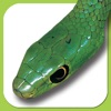 eSnakes of Southern Africa