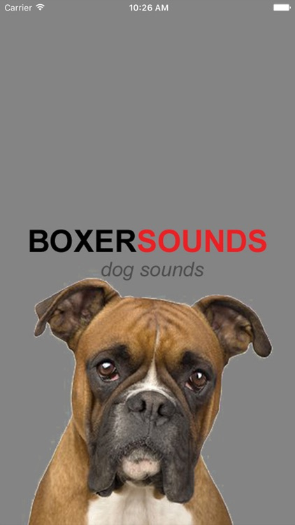 Boxer Dog Sounds & Barking