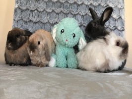 Bunny Piper Fun Pack
