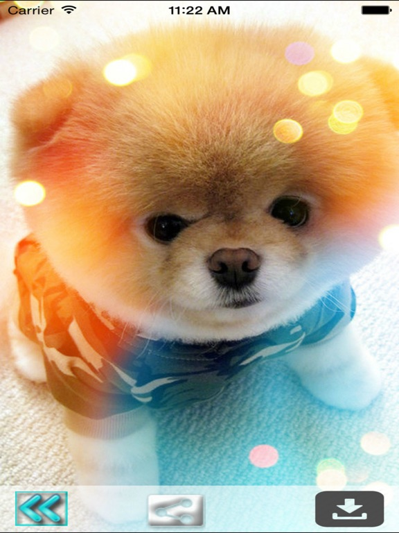 Dog Wallpapers Hd Cute Puppies Backgrounds App Price Drops