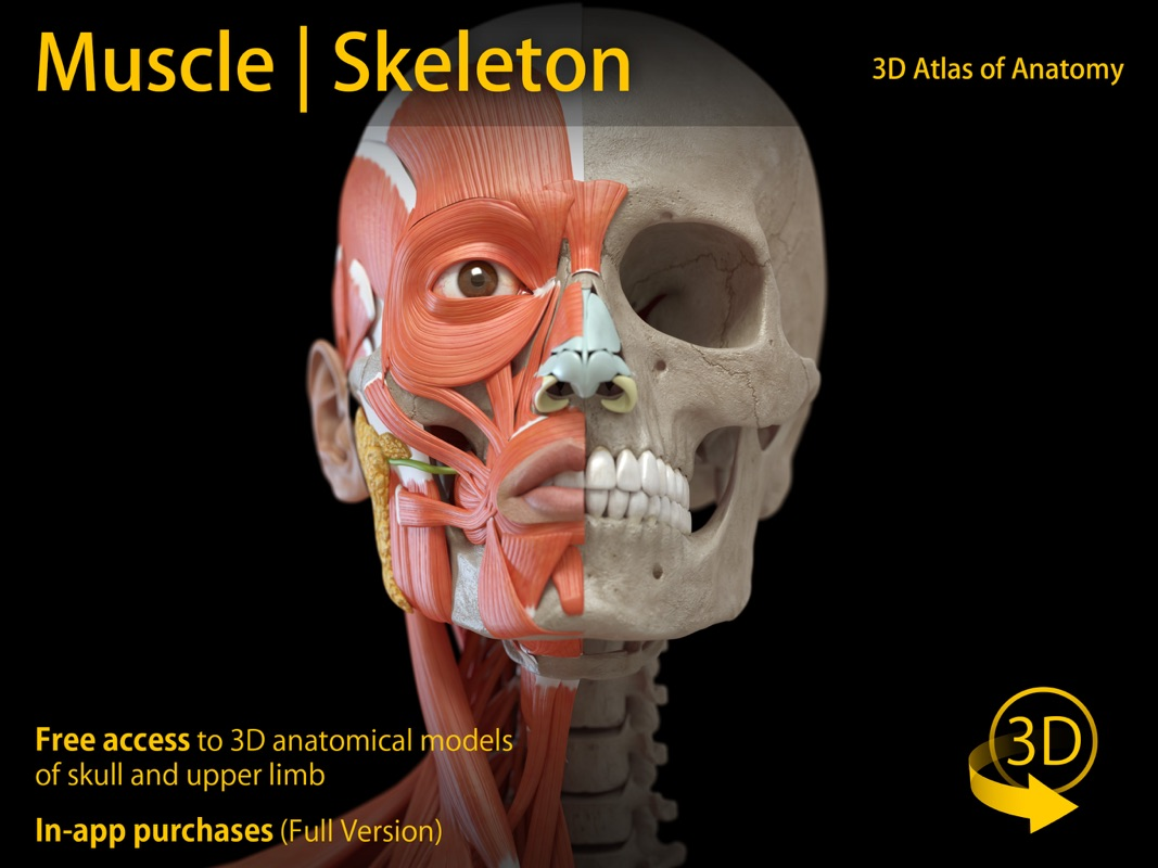 3 Minutes to Hack Muscle | Skeleton - 3D Anatomy - Unlimited ...